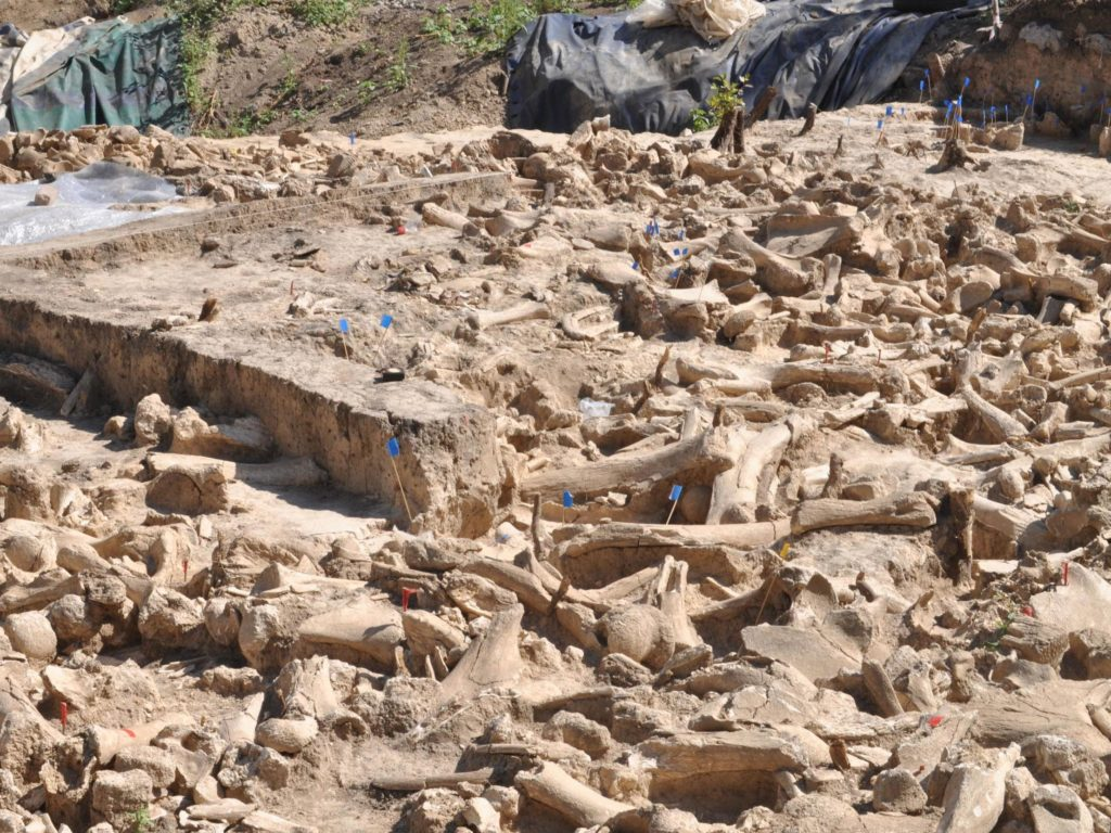 a 25,000-year-old structure of mammoth bones discovered in Russia. Photo: A.E. Dudin.